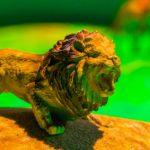 Сердитый лев на интерактивной песочнице